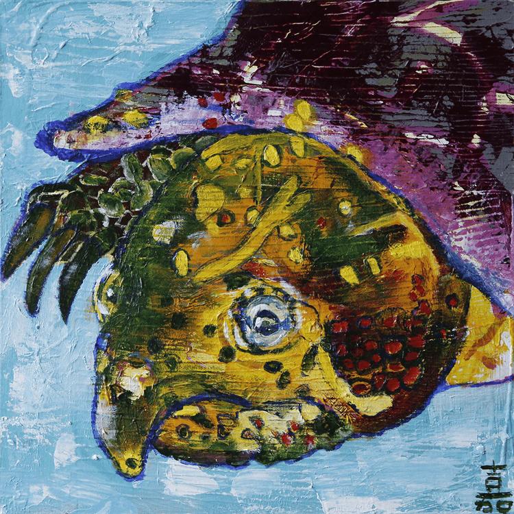 カメの王様 オオアタマガメ